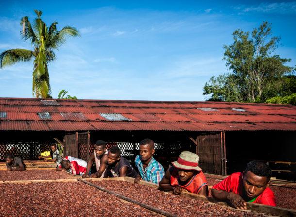 MADAGASCAR - LABOUR - AGRICULTURE - COCOA